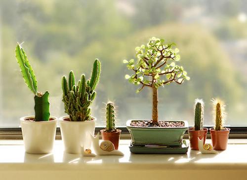 臥室適合擺放什么植物?
