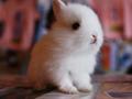 卯兔与其它生肖关系