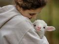 从出生时间看羊一生命运