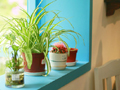 客厅植物勿乱摆犯风水禁忌