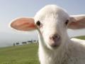 梦的故事:牧羊少年的梦