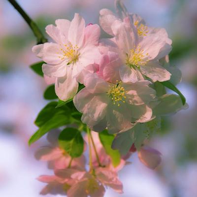 测你的五月是否会受桃花的青睐